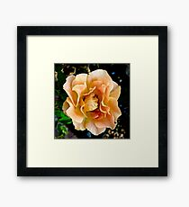 Orange You Glad You Stopped to Smell the Roses Framed Print