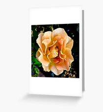 Orange You Glad You Stopped to Smell the Roses Greeting Card