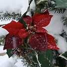 The Lonely Pointsettia by Carol Clifford