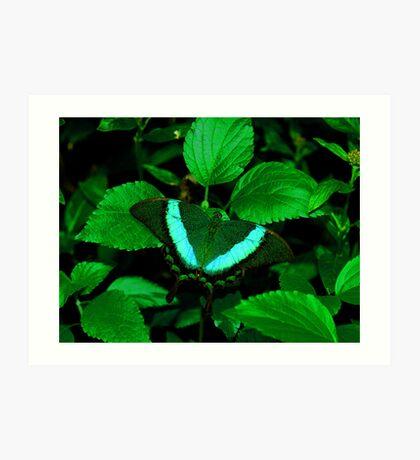 Hiding --- Emerald Swallowtail Art Print