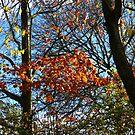 Autumn Leaves by SunriseRose