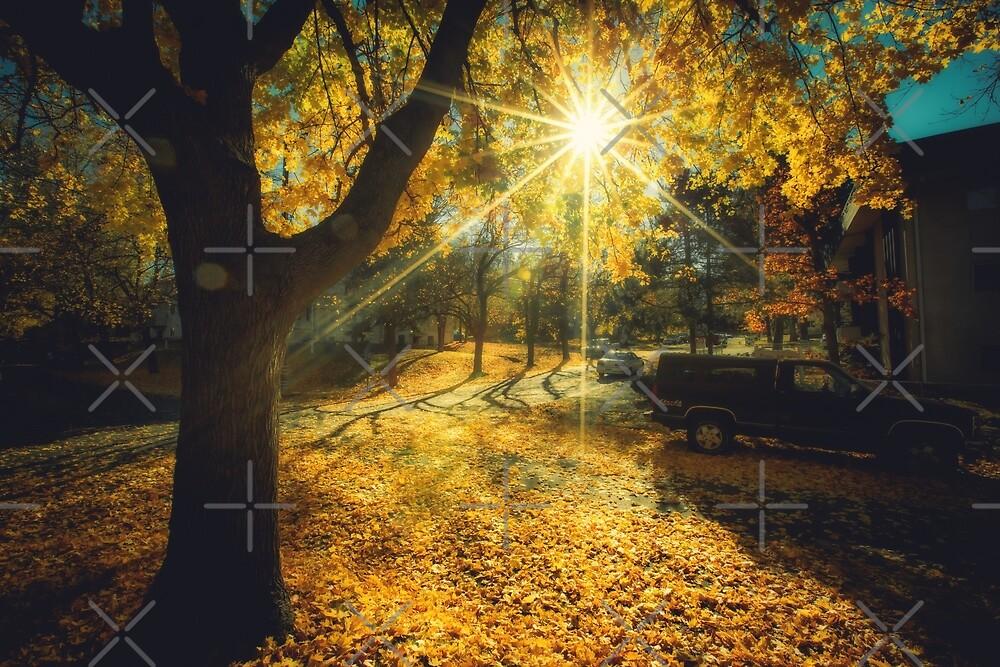 Das letzte Wochenende des beruhigenden gelben Herbstes von Victoria Avvacumova