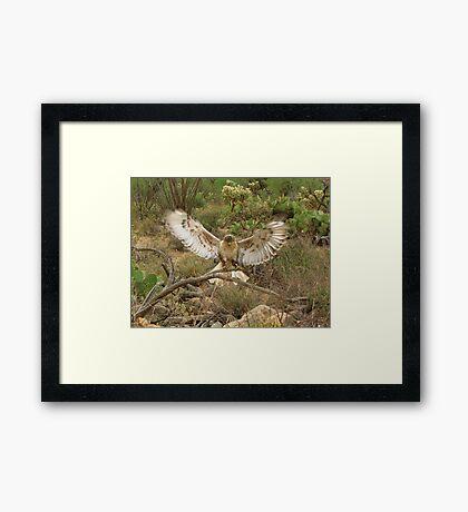 Ferruginous Hawk ~ Kachina Dreams Framed Print