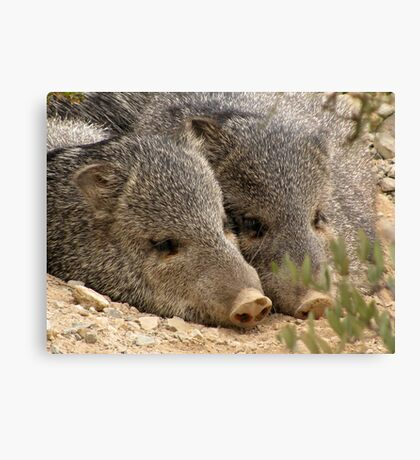 Happy as two Pigs in....... Canvas Print