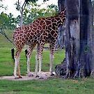 Giraffe with Six Legs by longaray2
