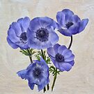 Pretty Periwinkle Poppies by Lois  Bryan