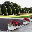 Roses, Begonias and Penstemon - Preston Temple Forecourt von BlueMoonRose