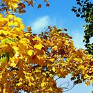 Autumn Glory by SunriseRose