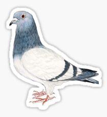 Pigeon T-Shirt Sticker