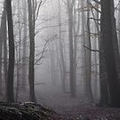 Forest fog by Heather Thorsen