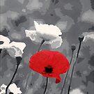 One Red Poppy by Samitha Hess Edwards