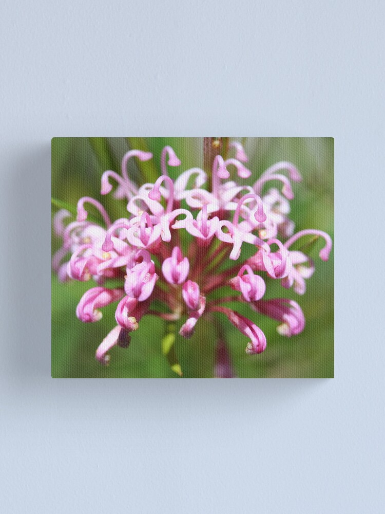 Alternate view of Grevillea leiophylla Canvas Print