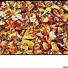 """"""" When Autumn leaves start to fall"""" by Malcolm Chant"""