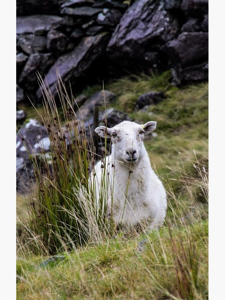 Welsh Sheep by BryonyJames