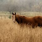 Running Free by maileilani