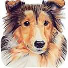 Shetland sheepdog Sheltie by doggyshop