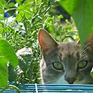George hunting grasshoppers by Twistedwhisker1