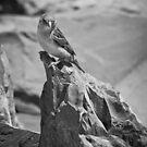 A Little Bird on a Mountain by Paul Thompson