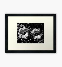 Winter Park Roses in Black and White Framed Print