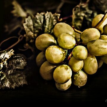 Grapes And Leaves by CJAnderson