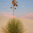 White Sands Yucca at Dawn by Mitchell Tillison