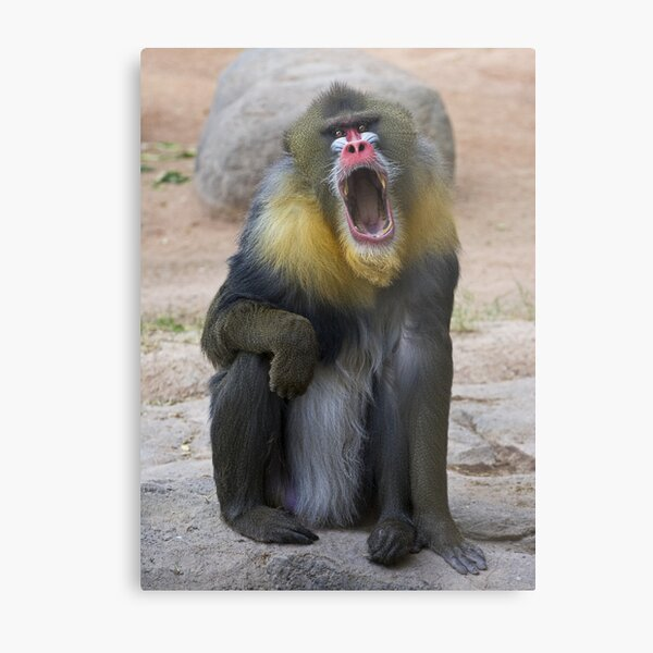 Colorful Character Metal Print