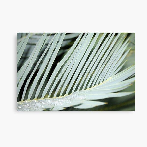 Encephalartos princeps Canvas Print