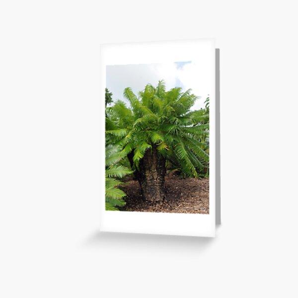 Cycas micronesica Greeting Card