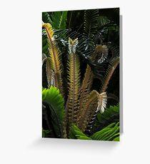 Encephalartos woodii Greeting Card