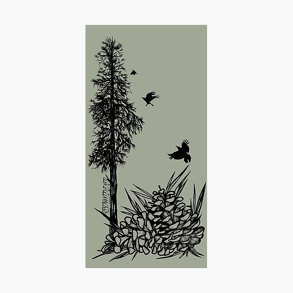 Pacific Northwest tree with crows and pinecones Photographic Print