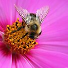Bee Delight by vette
