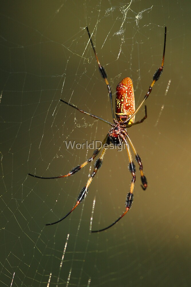 Orb-Weaver Spider by WorldDesign