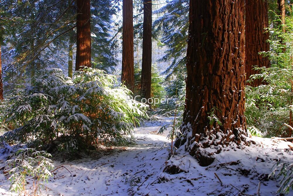 Redwood Grove snow scene by RCooper