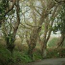 enchanted trees by Profo Folia