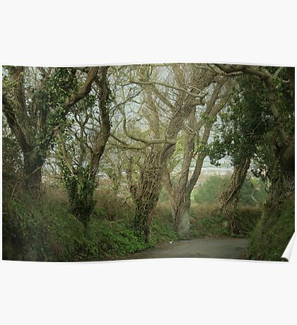 enchanted trees Poster