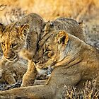 Mother Love For Her Lion Cub by Kay Brewer