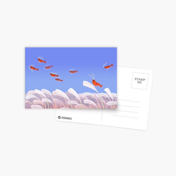 Flying cherry shrimp  Postcard