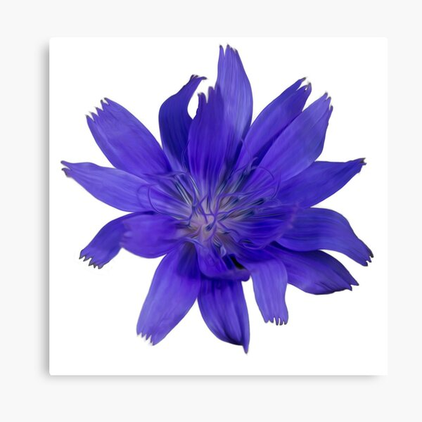 Purple Flower White (circle background) Canvas Print