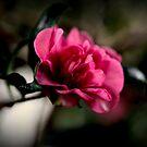 Camellia In Darkness by Evita