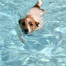 Swimmer by Adria Bryant
