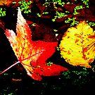 Fallen Leaves...Mt Dandenong,Victoria by graeme edwards