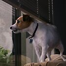 Doggie in the Window by abryant
