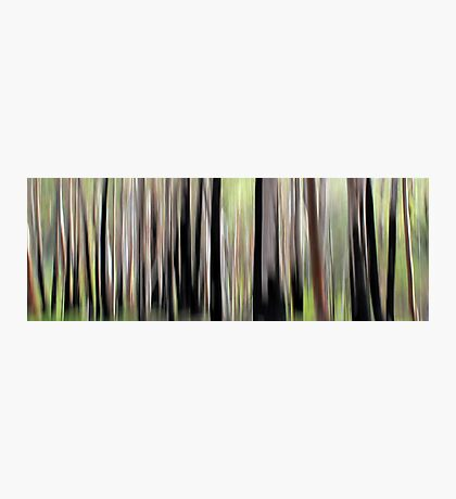 Spring Forest Photographic Print