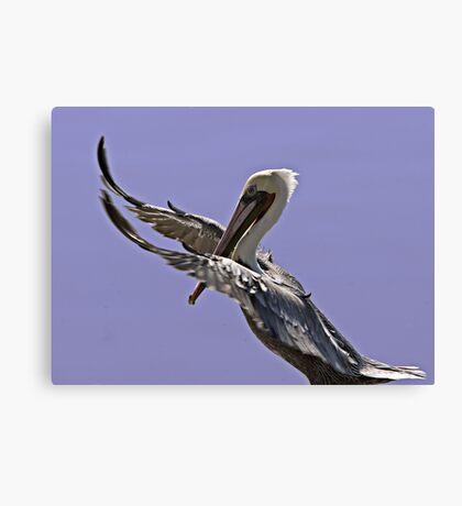 Pelican Tai Chi Canvas Print