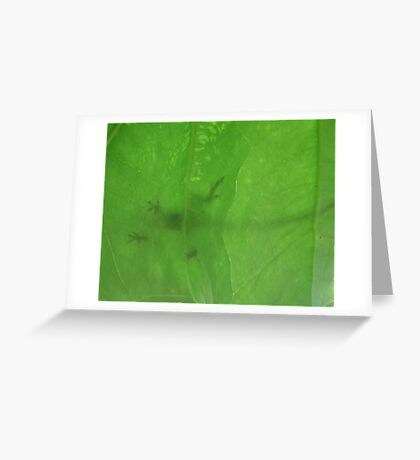 Down Under (an Anole) Greeting Card