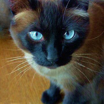 Kit Kat by nkentb