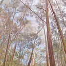 Eucalyptus Forest von nurmut