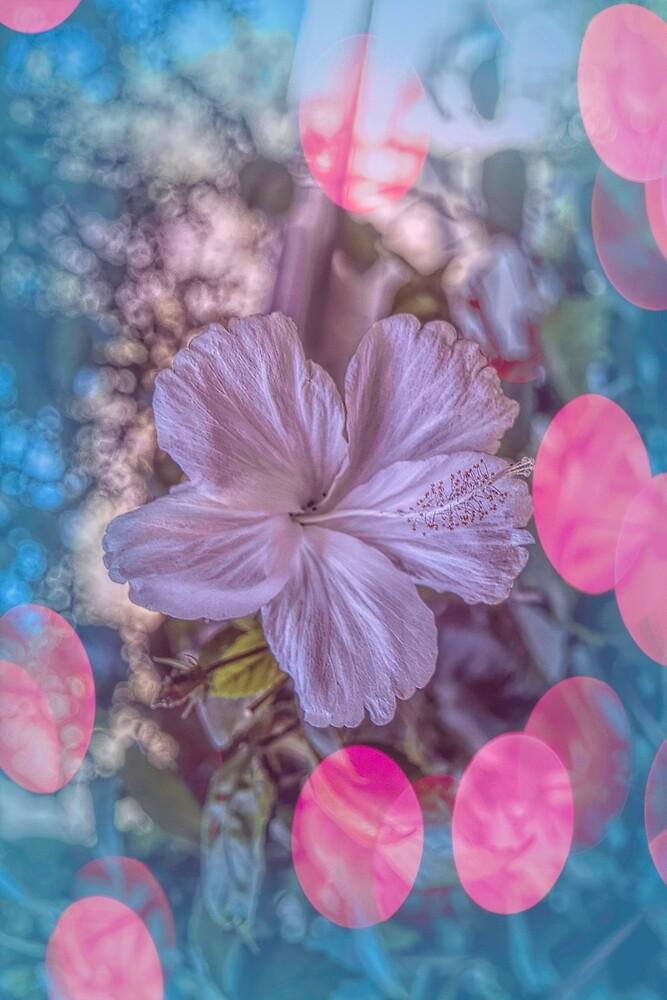Hibiscus #5 by Elaine Teague