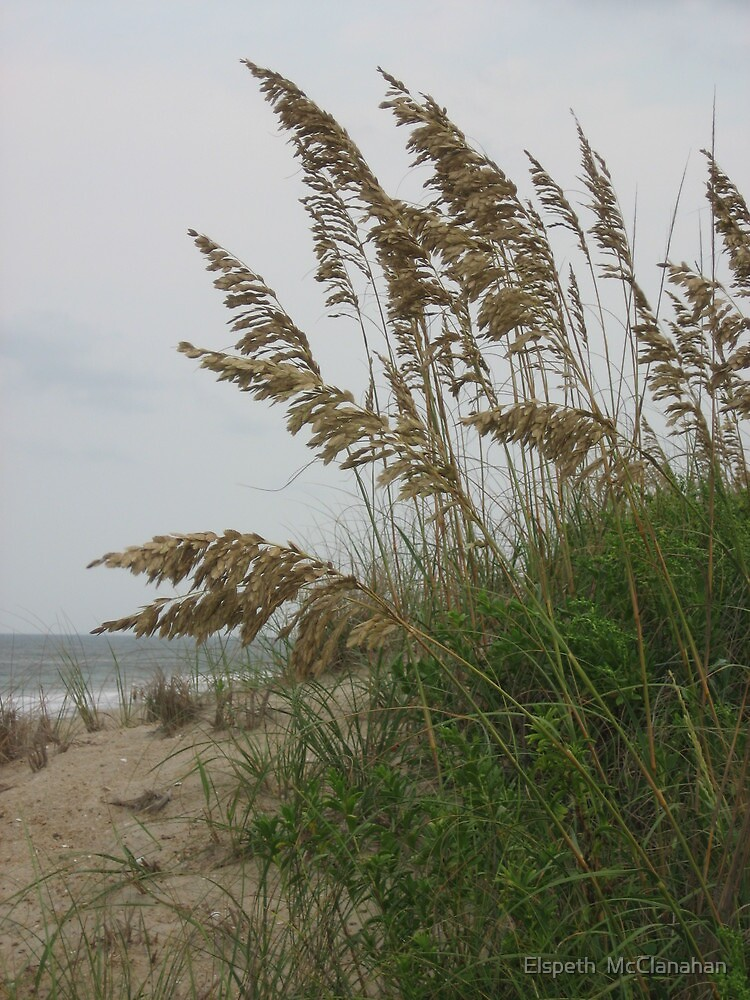OBX Dunes by Elspeth  McClanahan