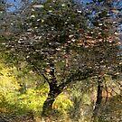 Impressionist Reflection...Mt Dandenong, Victoria by graeme edwards